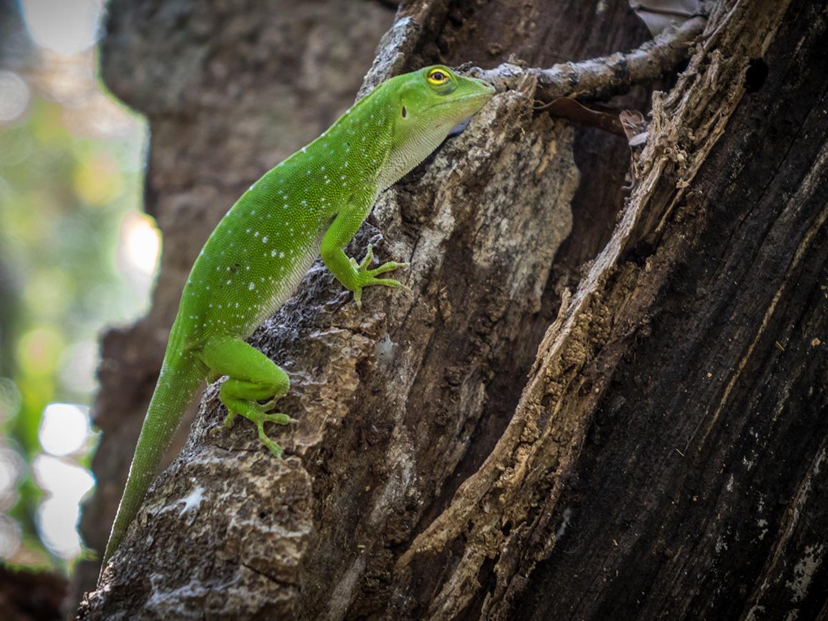 aguisur-caribetours-cahuita-echse