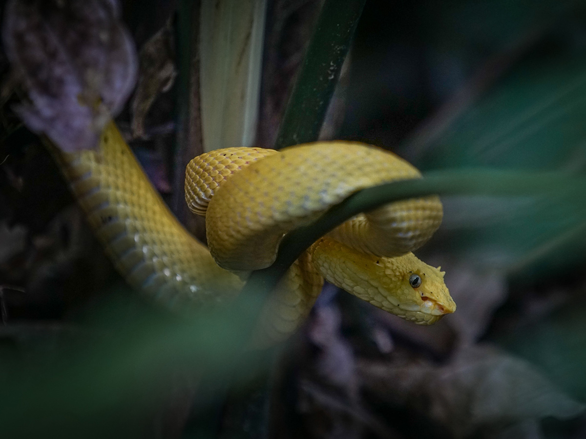 aguisur-caribetours-cahuita-schlange