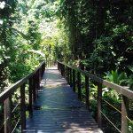 aguisur-caribetours-cahuita-steg