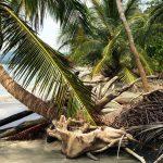 aguisur-caribetours-cahuita-strand