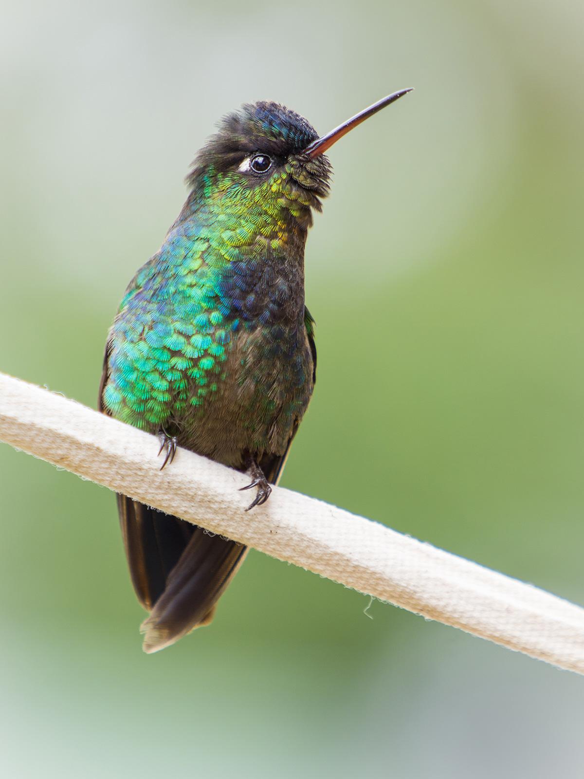 aguisur-caribetours-cahuita-vogelbunt