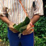 aguisur-caribetours-costarica-project-bibri-blatt