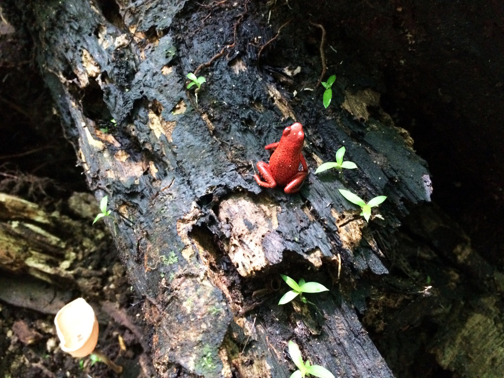 aguisur-caribetours-costarica-project-bibri-frosch