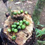 aguisur-caribetours-costarica-project-bibri-reservat