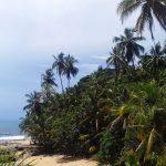 aguisur-caribetours-palmenstrand-Gandoca-Manzanillo-Schutzgebiet
