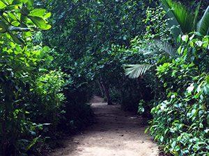 aguisur-costarica-caribetours-cahuita-wanderweg-natur-und-kultur-ablauf