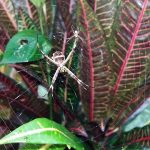 aguisur-costarica-caribetours-landausflug-spinne-natur-und-kultur