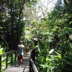 aguisur-costarica-caribetours-laufsteg-tour-nicht-alles-banane-q