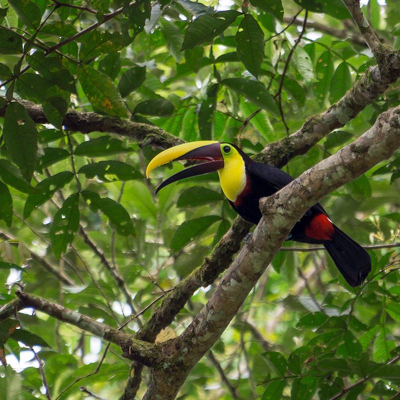 aguisur-costarica-caribetours-tukan-tour-nicht-alles-banane-q