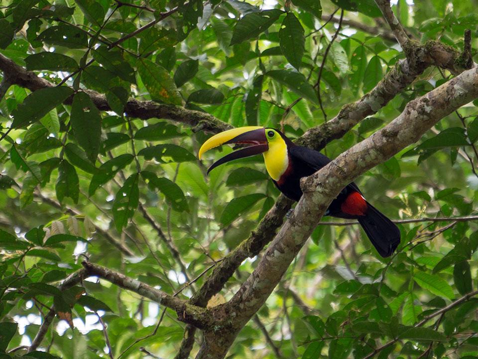aguisur-costarica-caribetours-tukan-tour-nicht-alles-banane