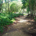 aguisur-costarica-caribetours-wanderweg-tour-nicht-alles-banane