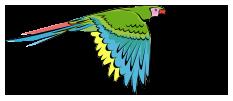 COSTA RICA CARIBE TOURS
